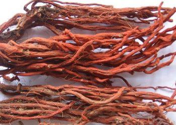 446 Шалфей (Salvia): Spirit of plants. Красный корень шалфея
