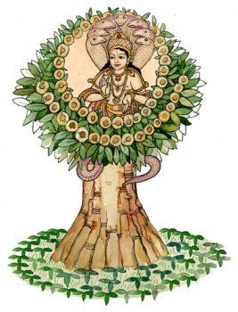 Spirit of Plants: Виджайсар