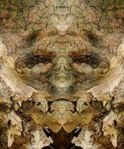 Виджайсар: дух коры