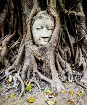 Виджайсар: корень